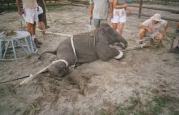 animal atrocity